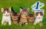 a line of kittens with the First National Bank at Paris logo